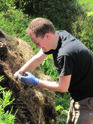 Picking maggots out of cow poo
